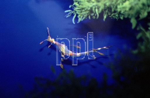 Sydney Aquarium Australia
