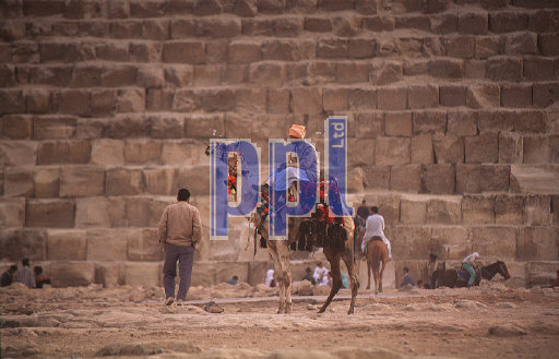 Local camel rider by The Great Pyramid of Giza Egypt