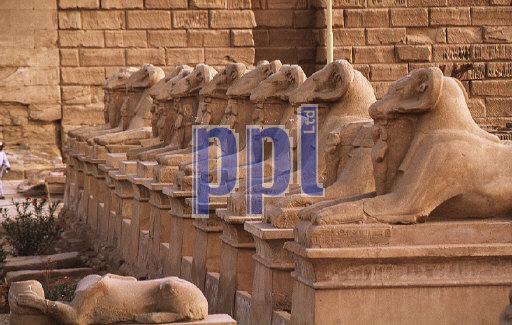 Avenue of Rams in Temple of Karnak Luxor Egypt