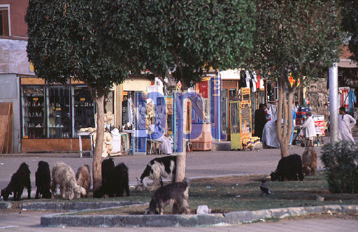 Local life in Luxor Egypt