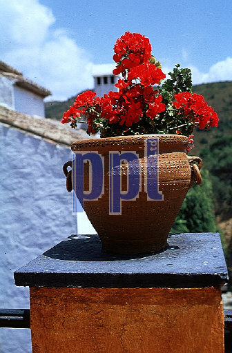 Regional architecture with pot plant in terracotta urn, Spain