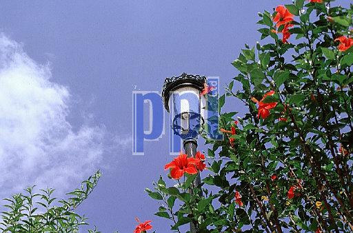 Promenade lamp and shrubs in flower, Spain